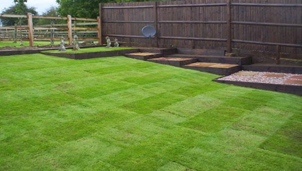 lawn_cricket